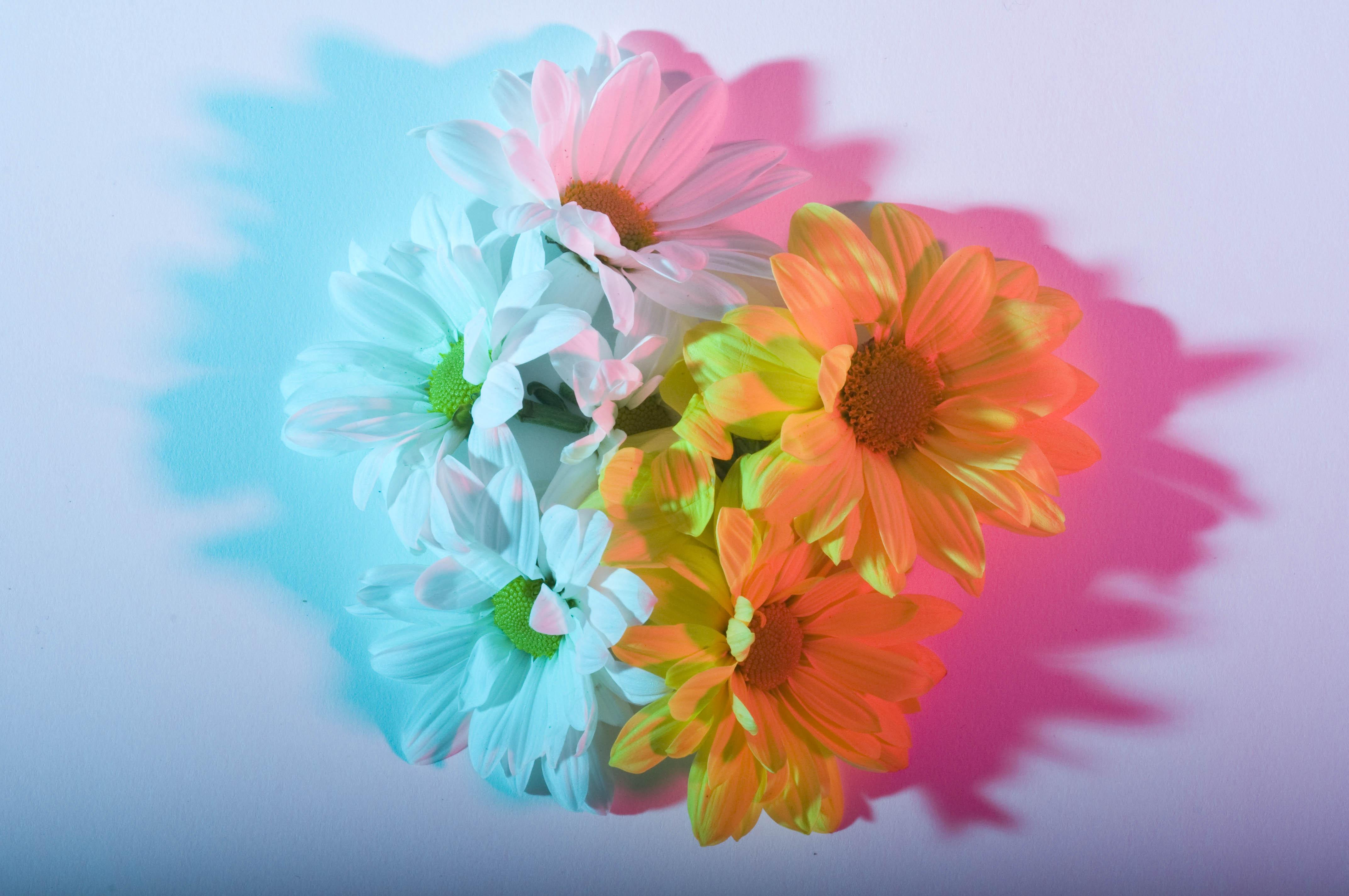 International Colour Day 28